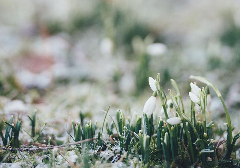 Navigating Spring Break as a Family